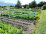 A long view of the allotments.. Hubby walking down to shed..