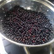 Elderberries picked sorted and washed