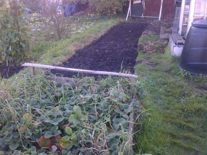This is a new piece dug over next to the strawberry bed.. We are intending to plant some apple and pear trees along here.
