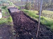 Fruit Trees now planted. One Cooking apple, One Pear and one eating apple tree.