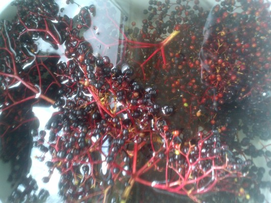 Soaking Elderberries. You only use the black berries not the red. I have no idea what the reflection is in the water!