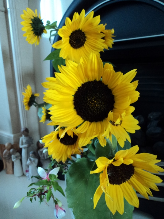 Sunflowers from our Garden