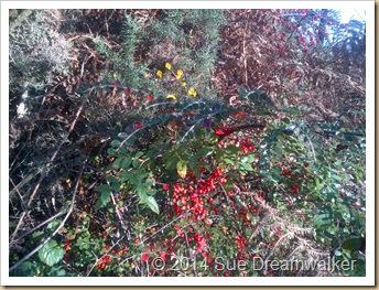 Autumn Fruits Rose Hips