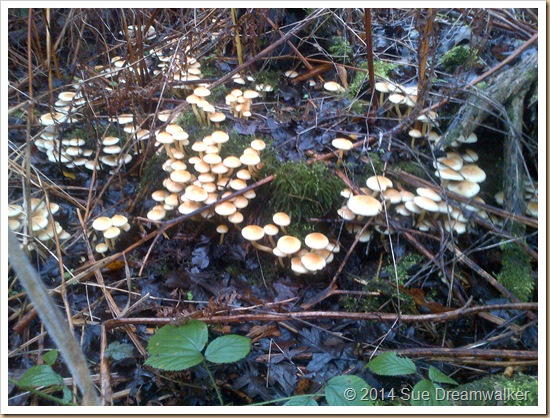 Fungi  The Trees Communication System