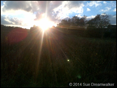 Sun over the Nettles