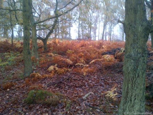 Woods-shedding-Leaves.jpg