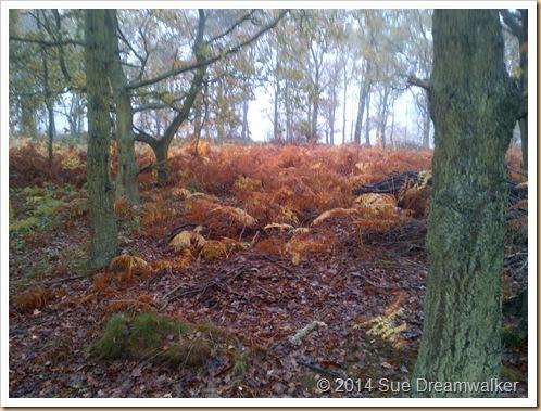 Woods shedding Leaves