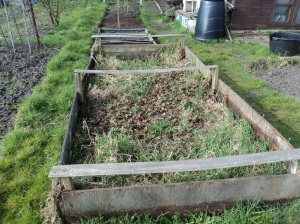 Old Strawberry bed.
