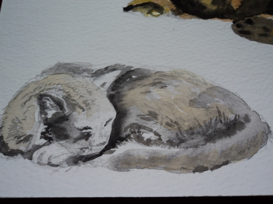 Watercolour Sleeping Cat