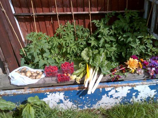 Harvesting Dinner