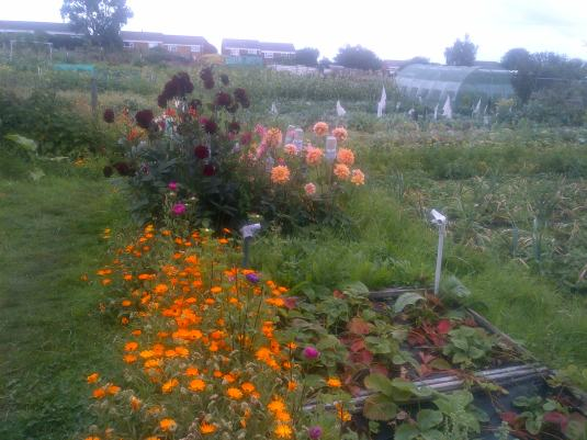 Flower bed2