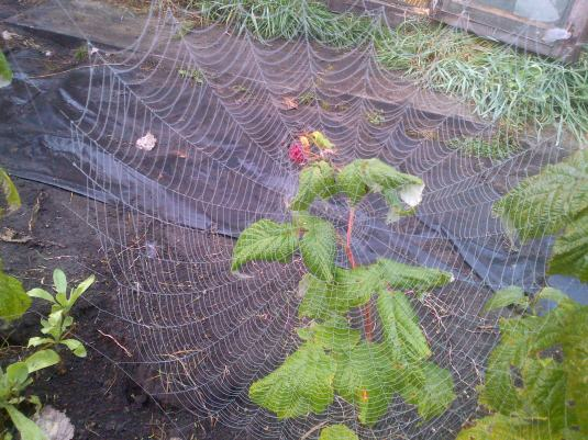 Spiders Web 4