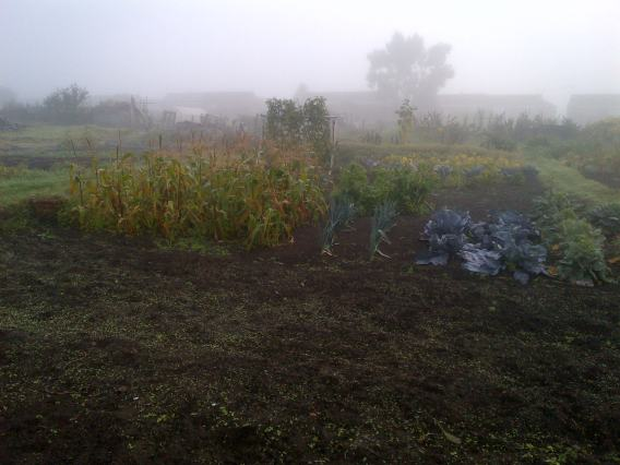 Misty Morning on the Allotment Plot