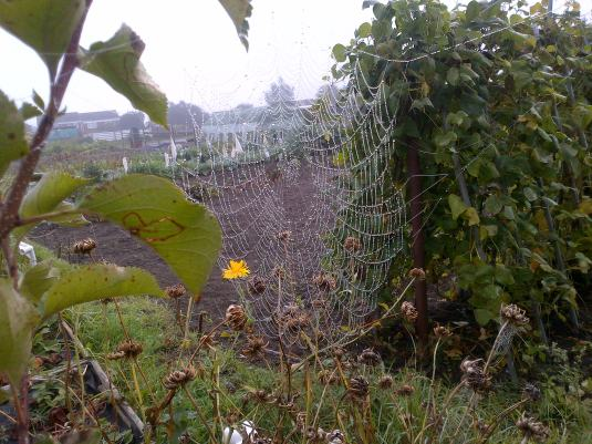 Spiders Web 3
