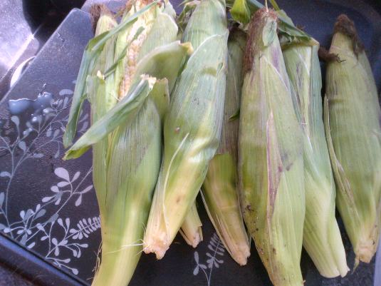 Just some of the sweetcorn..