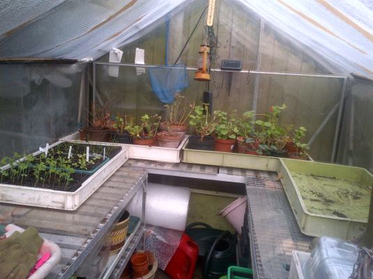 Preparing the greenhouse ready for planting
