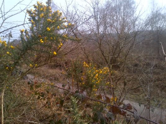 Gorse too has its thorns, but it still shines its beauty to us
