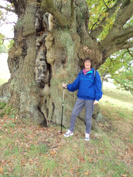 Oak Tree and Me