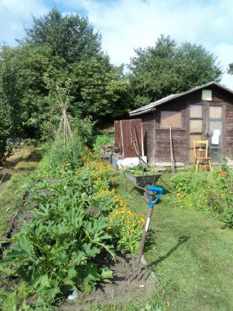 Courgettes, on the left, with marigold boarder. The wigwam of Sweetpeas..